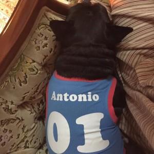 anton(1)